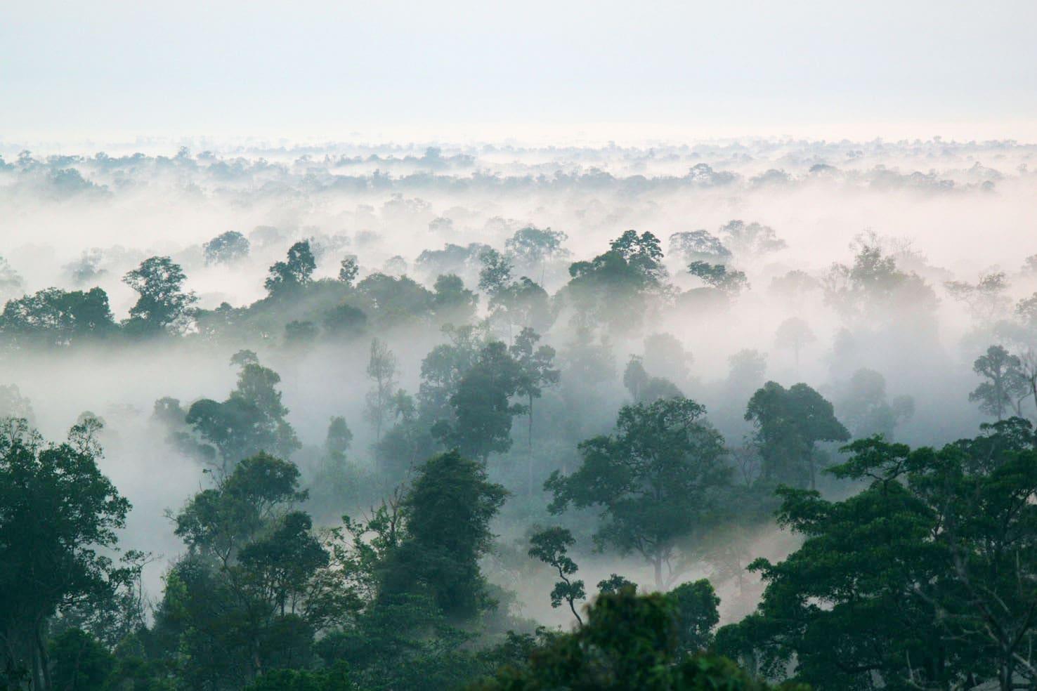 0.a - Jenis Jenis Hutan Di Indonesia